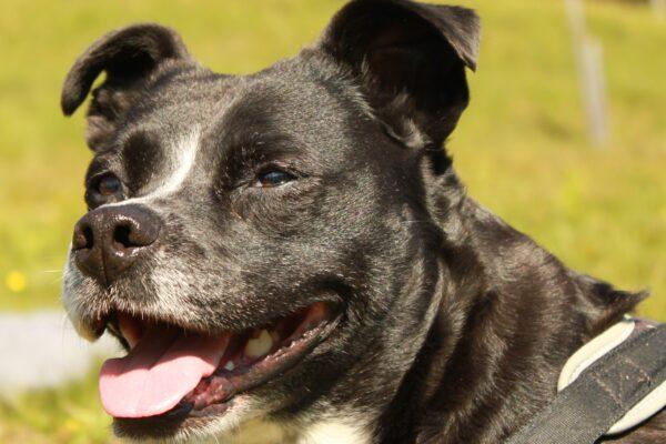 Grenzeloze hondenliefde mei 2021