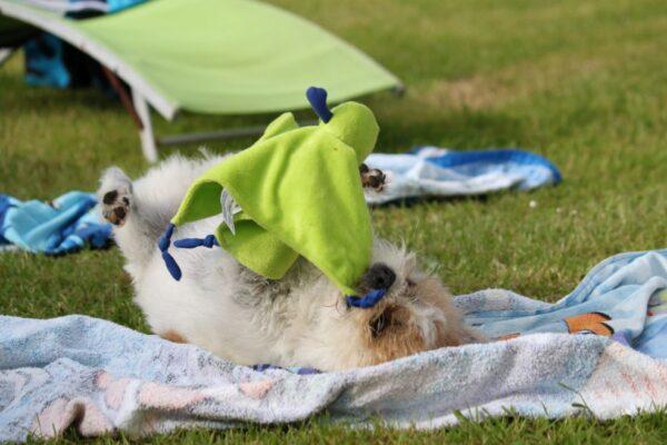 Grenzeloze hondenliefde juli 2021