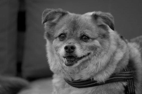 Grenzeloze hondenliefde januari 2021