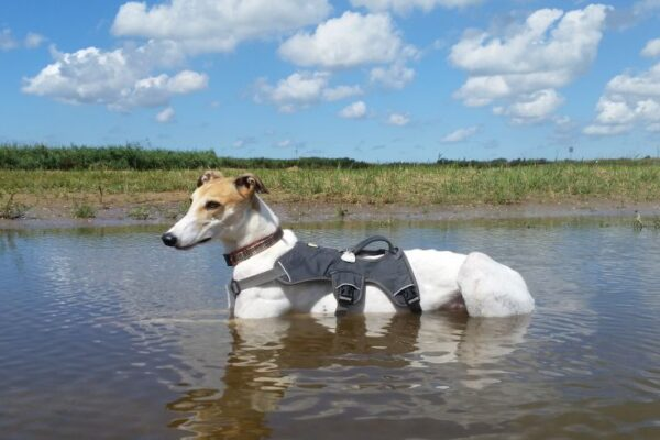 Grenzeloze hondenliefde juni 2021