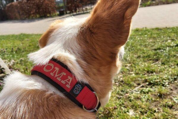 Grenzeloze hondenliefde april 2021